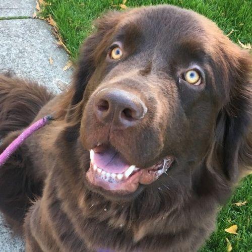 Pet Care Provider Stefanie B Gallery Image 1