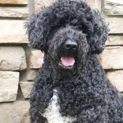 Pet Care Provider Karyn C Gallery Image 2