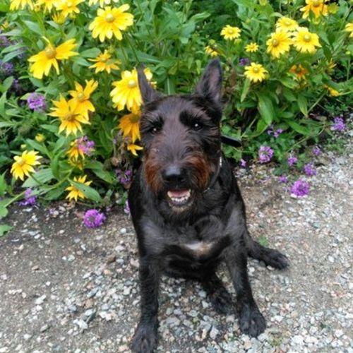 Pet Care Provider Maria Perez's Profile Picture