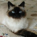 West Carrollton, Ohio Cat Sitter Posting