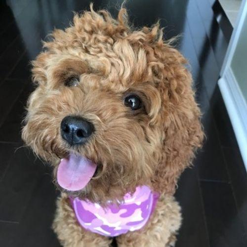 Pet Care Job Petrice Gentile's Profile Picture