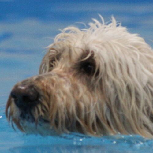 Pet Care Provider Macie H's Profile Picture