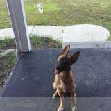 Dog Walker Job in Linden