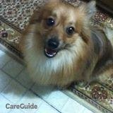 Dog Walker, Pet Sitter in Bronx