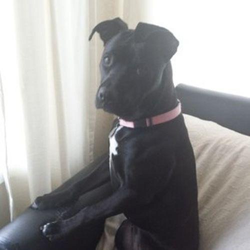 Pet Care Job Regina C's Profile Picture