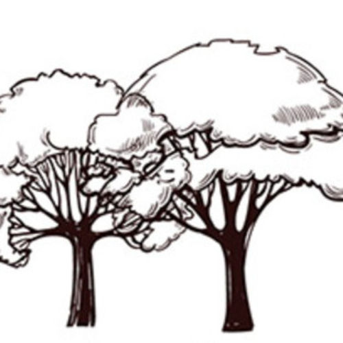 Landscaper Job Cyrus H's Profile Picture