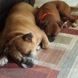 Dog Walker, Pet Sitter in Bourbonnais
