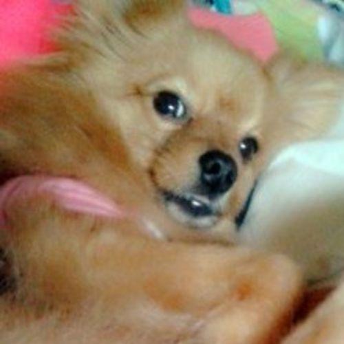 Pet Care Provider Erica K Gallery Image 1