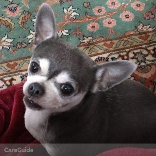 Pet Care Provider Fran A's Profile Picture