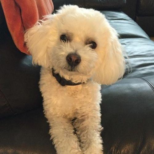 Pet Care Provider Mike Shefler Shefler's Profile Picture