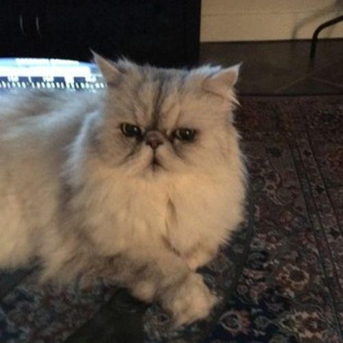 Pet Care Provider Debra Tuttle Gallery Image 3