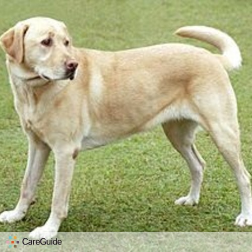 Pet Care Provider Jose Ibarrondo's Profile Picture