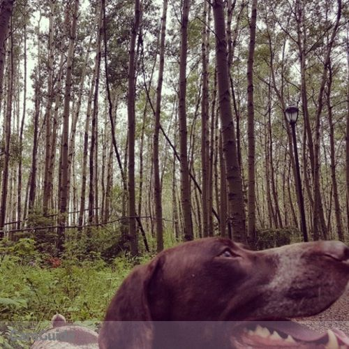 Pet Care Provider Aisha Goulden's Profile Picture