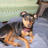 Dog Walker, Pet Sitter in Rye Brook