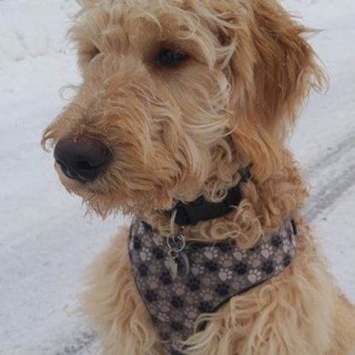 Pet Care Provider Furrific Dog walking Kerry Rowe's Profile Picture