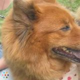 Dog Walker, Pet Sitter in Tamaqua