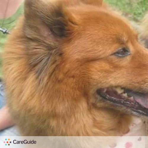 Pet Care Provider Hannah Wollweber's Profile Picture