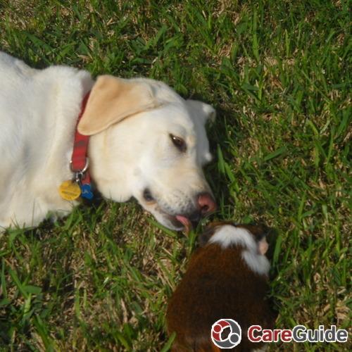Pet Care Provider Ashley  Rhodes's Profile Picture