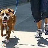 Dog Walker in Etobicoke
