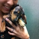 Dog Walker, Pet Sitter in Frisco
