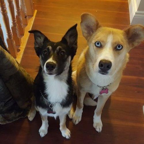 Pet Care Job Amie R's Profile Picture