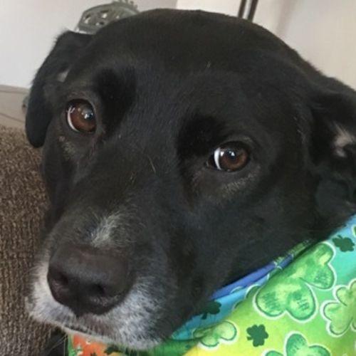 Pet Care Provider Sandy G's Profile Picture