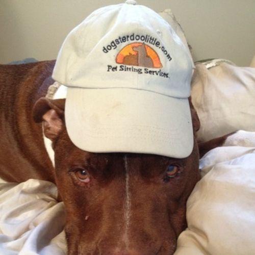 Pet Care Provider Steven Bell Gallery Image 2