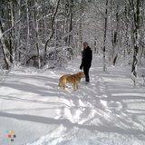 Dog Walker in Collingwood