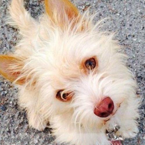 Pet Care Provider Denise A's Profile Picture