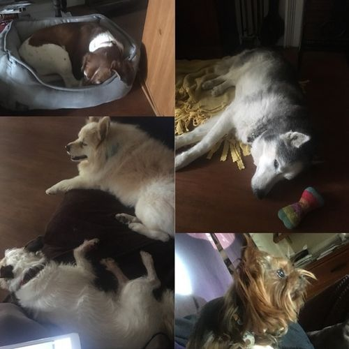 Pet Care Provider Veronica Durre's Profile Picture