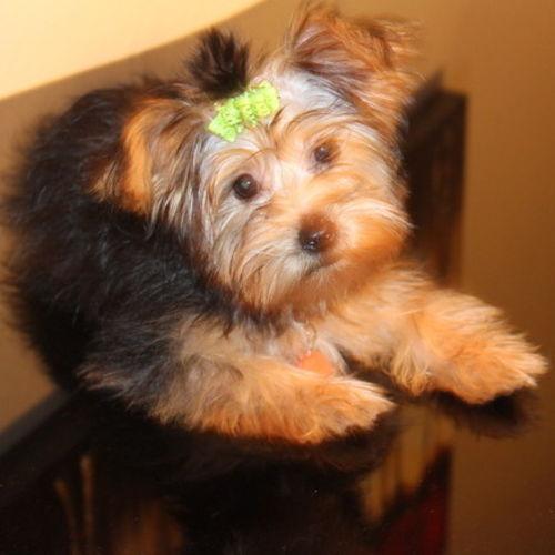 Pet Care Provider Dianna C Gallery Image 3
