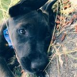 Trustworthy Petsitter Needed in Puyallup