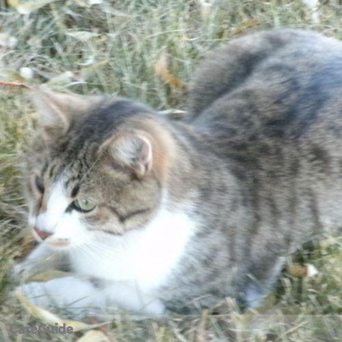 Pet Care Provider Mindy C's Profile Picture