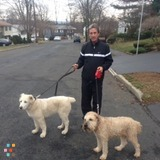 Dog Walker, Pet Sitter in Nyack