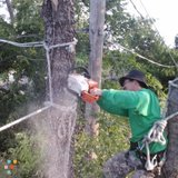Awesome Tree Service