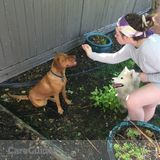 Dog Walker, Pet Sitter, Kennel in Calgary
