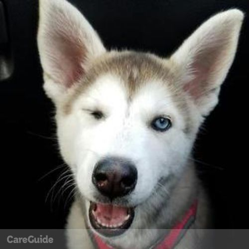 Pet Care Provider Megan C's Profile Picture