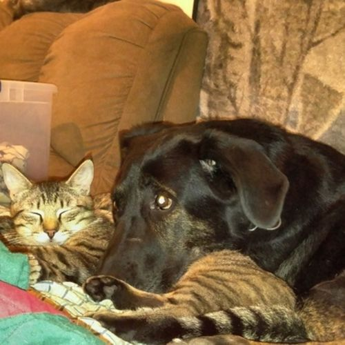 Pet Care Provider Chelsea Steer Gallery Image 2