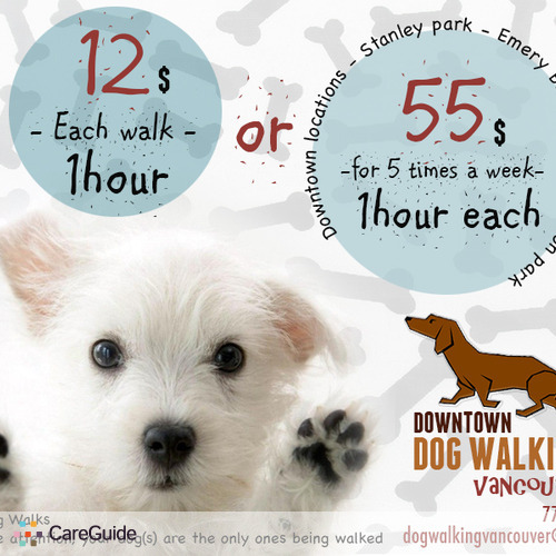 Pet Care Provider Downtown Dog Walking's Profile Picture