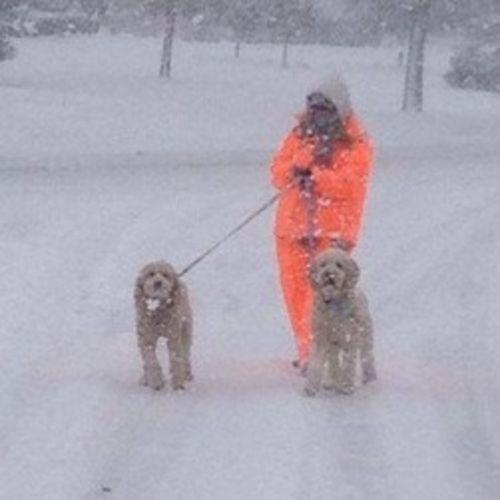 Pet Care Provider Diane Whyatt's Profile Picture