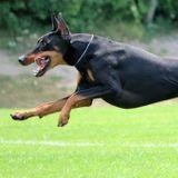 Happy Tails Pet Care Services
