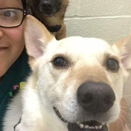 Pet Care Provider Cindy A's Profile Picture
