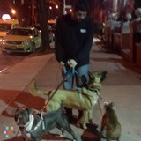 Dog Walker, Pet Sitter in Queens