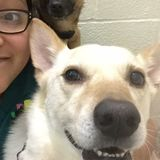 Dog Walker, Pet Sitter in Dallas