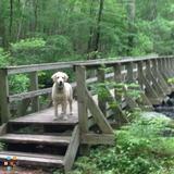 Dog Walker, Pet Sitter in Maynard