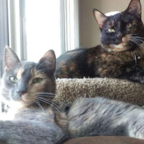 Pet Care Job Sarah Milkintas's Profile Picture