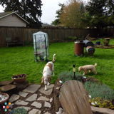 Dog Walker, Pet Sitter in Marysville