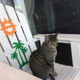Special needs cat sitter needed in South Tampa.