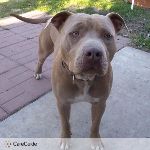 Pet Care Provider Joel S's Profile Picture