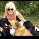 Dog Walker, Pet Sitter in Huntersville